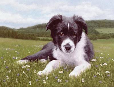 Border Collie Puppy Painting Print by Rachel Stribbling