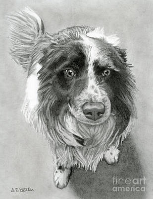White Drawing - Border Collie by Sarah Batalka