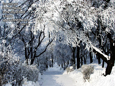 Winter Promise Digital Art - Born This Day by Judi Saunders