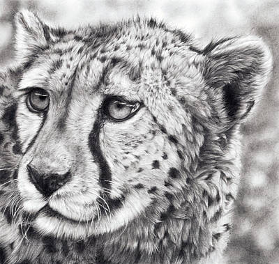 Cheetah Drawing - Born To Run by Peter Williams