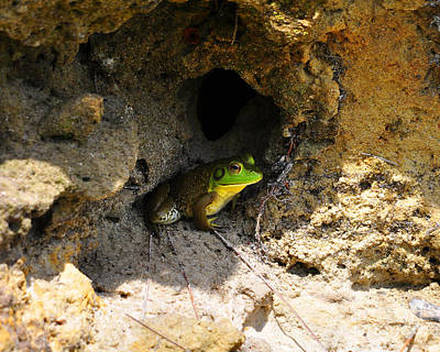 Photograph - Boss Frog by Al Powell Photography USA