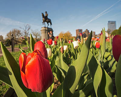 Boston Public Garden Tulips And George Washington Statue 2 Print by Toby McGuire