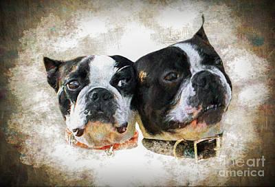Breed Digital Art - Boston Terrier by Ezeepics
