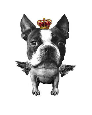 Boston Terrier, The King Print by Madame Memento