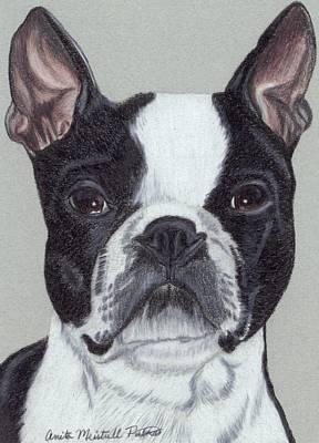 Boston Terrier Vignette Original by Anita Putman