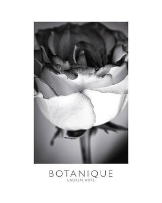 Botanique Print by Lausen Arts