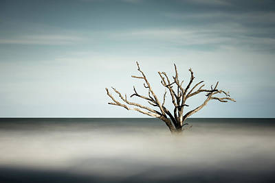 Edisto Photograph - Botany Bay by Ivo Kerssemakers