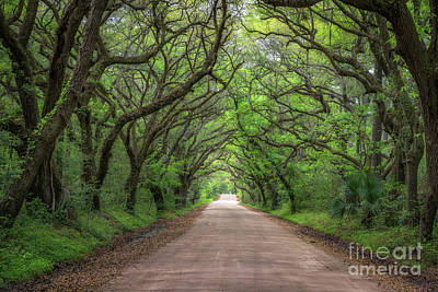 Angel Island State Park Photograph - Botany Bay Road  by Michael Ver Sprill