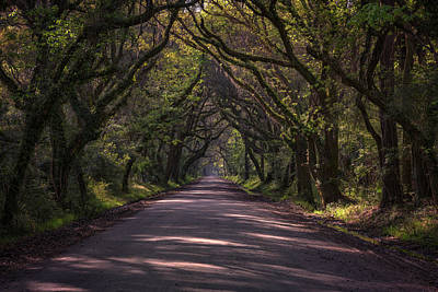 Edisto Photograph - Botany Bay Road by Rick Berk