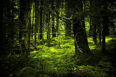 Photograph - Bottom Of The Forest Floor by Nora Blansett