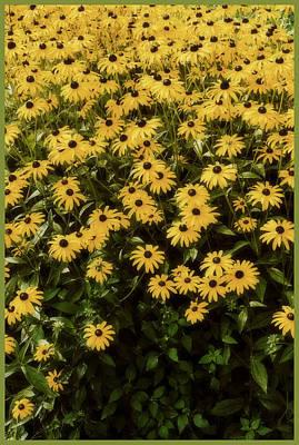 Boundary...wildflowers Print by Tom Druin