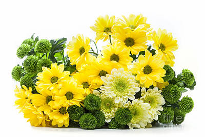 Mother Photograph - Bouquet Of Fresh Spring Flowers Isolated On White by Michal Bednarek