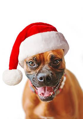 Boxer Dog Christmas Print by Shara Lee