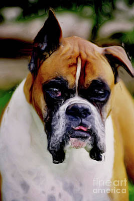 Boxer Expressions Print by Laurel Sherman