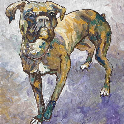 Boxer Print by Sandy Tracey