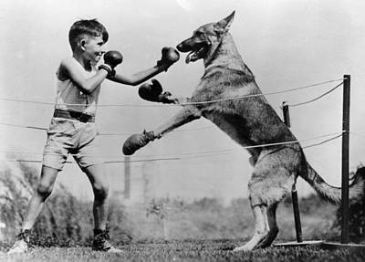 Boys Boxing Photograph - Boxing With Dog by Topical Press Agency