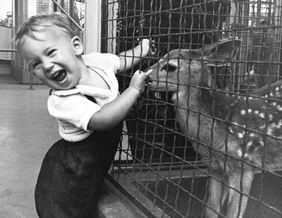 Wire-mesh Photograph - Boy Enchanted By Fawn by Underwood Archives