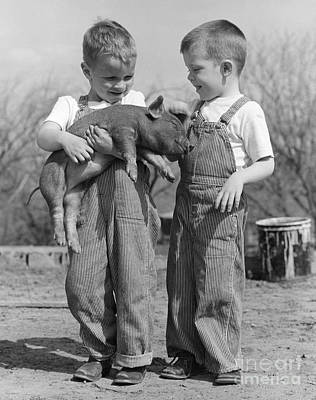 Boys Holding Piglet, C.1950s Print by B Taylor ClassicStock