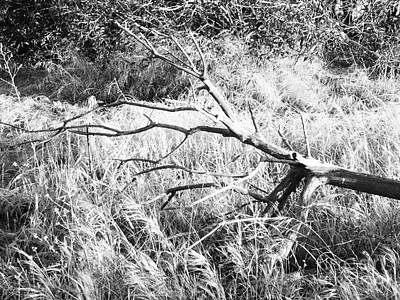 Country Photograph - Branch In Black And White by Leah McPhail