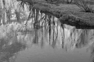Branches Reflected Print by Priya Ghose