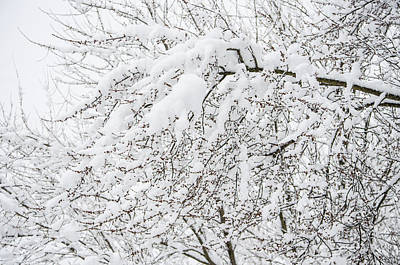 Wintry Photograph - Branches Weighted With Snow by Deborah Smolinske