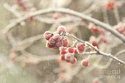 Branches With Early Winter Frost With Red Berries Print by Sandra Cunningham