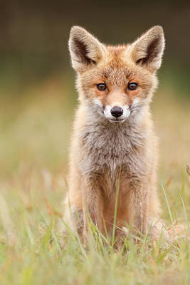 Brave New Fox Kit Print by Roeselien Raimond