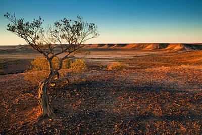 Trees Photograph - Breakaway Dawn by Mike  Dawson