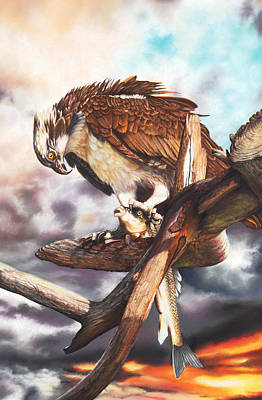 Osprey Drawing - Breakfast In America by Peter Williams