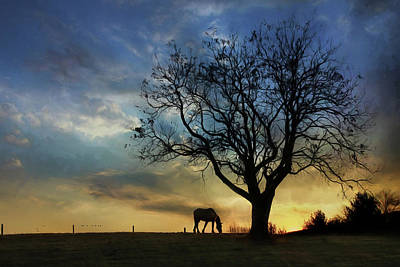 Photograph - Grazing With A View by Lori Deiter