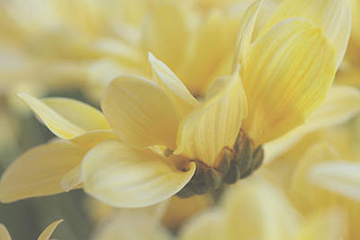 Dreamy Food Photograph - Breath Of Sunlight by Connie Handscomb
