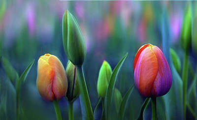 Tulip Digital Art - Breezy by Jessica Jenney