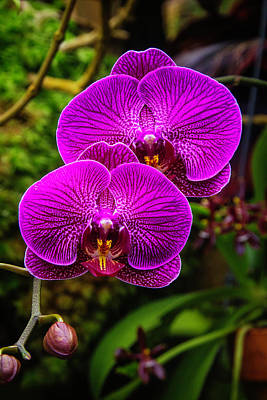 Pink Orchid Petals Photograph - Bright Purple Orchids by Garry Gay