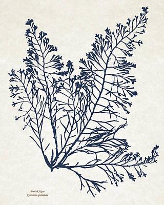 Rollo Digital Art - British Algae Cystoseira Granulata by Christina Rollo