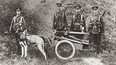 British Army Using Dogs To Pull A Print by Vintage Design Pics
