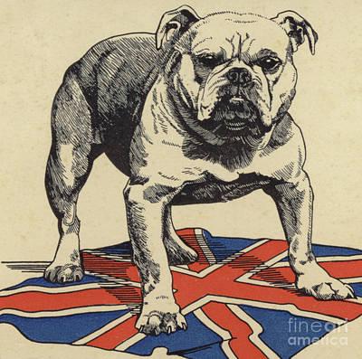 English Drawing - British Bulldog Standing On The Union Jack Flag by English School