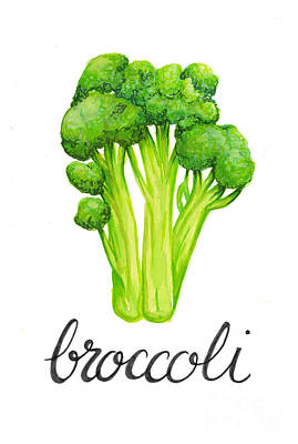 Food And Beverage Drawing - Broccoli by Cindy Garber Iverson