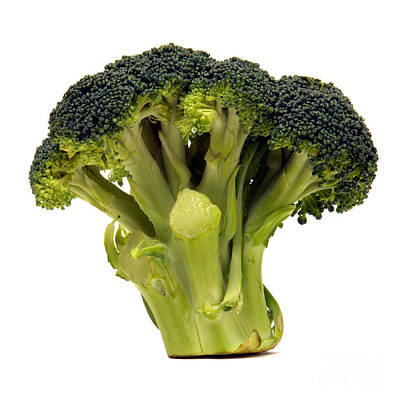 Broccoli Photograph - Broccoli  by Olivier Le Queinec