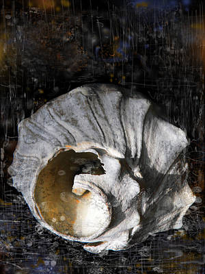 Wash Drawing - Broken Shell by Lola Bronzini
