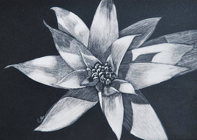 Painting - Bromeliad by Diane Cutter