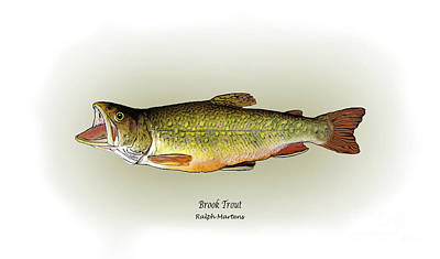 Trout Drawing - Brook Trout by Ralph Martens