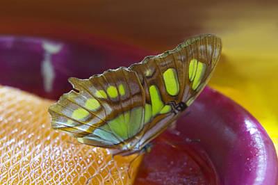 Petal Digital Art - Brown And Green Butterfly by Art Spectrum