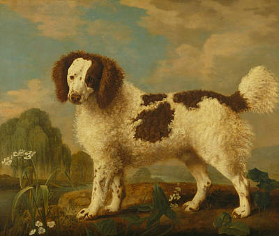 Water And Plants Painting - Brown And White Norfolk Or Water Spaniel by George Stubbs