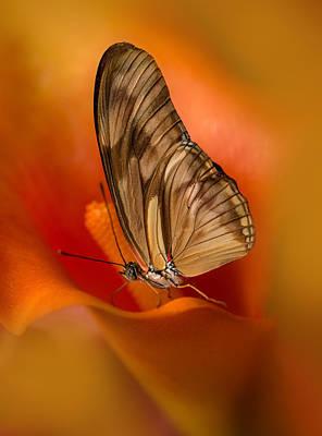 Brown Butterfly On Calia Flower Print by Jaroslaw Blaminsky