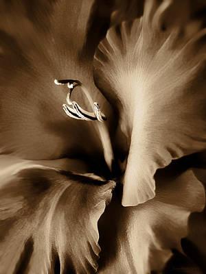 Brown Velvet Gladiolus Flower Print by Jennie Marie Schell