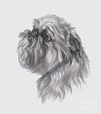 Griffon Drawing - Brussels Griffon Dog Portrait  Drawing by I Am Lalanny