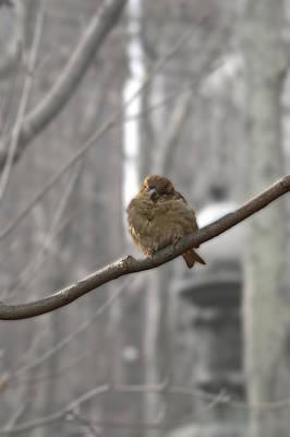 Bryant Park Bird Nyc Print by Henri Irizarri