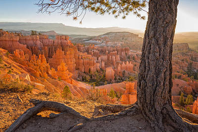 Golden Light Photograph - Bryce Canyon National Park Sunrise 2 - Utah by Brian Harig