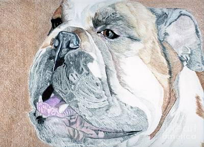 English Bulldog Drawing Drawing - Bubba by Crystal Wacoche