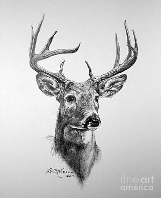 Nature Study Drawing - Buck Deer by Roy Anthony Kaelin